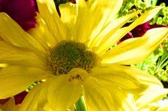 Floral Macro Arrangement Stock Photo