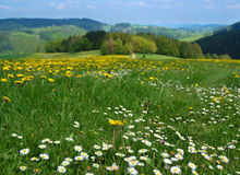 Floral meadow Stock Photography