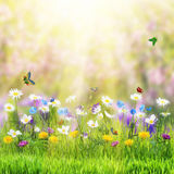 Floral meadow and butterfly Royalty Free Stock Images