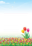 Floral meadow. Tulips. Floral meadow. red, yellow, pink tulips Royalty Free Stock Images