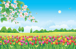 Floral meadow. Tulips. And tree royalty free illustration