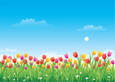Floral meadow. Tulips Royalty Free Stock Image