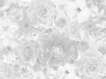 Floral mourning background Stock Image