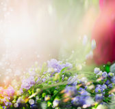 Floral nature background  with little blue flowers. Stock Photos