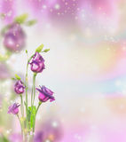 Floral nature background with purple garden flowers and bokeh. Place for text Stock Photos