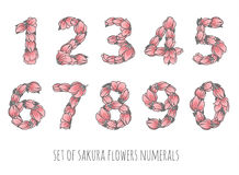 Floral numbers vector set - sakura flowers elegant style numerals. Ornament for decoration or education design Stock Photography