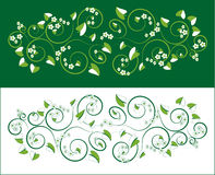 Floral ornament. On white and green background Royalty Free Stock Photos
