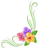 Floral ornament. Corner floral ornament with pansy Stock Photos