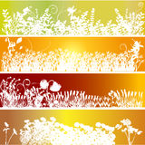 Floral ornament Royalty Free Stock Photos