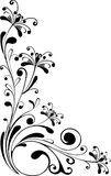 Floral ornament -  Royalty Free Stock Images