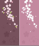 Floral Ornament - Sakura Royalty Free Stock Photos