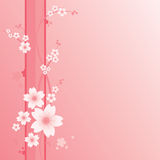 Floral Ornament - Sakura. Sakura flowers on the pink ground Stock Photos