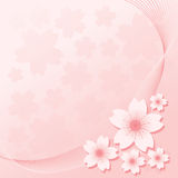 Floral Ornament - Sakura. Sakura flowers on the pink ground Stock Photography