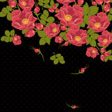 Floral ornament with wild rose on a polka dot Royalty Free Stock Photo