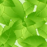 Mint leaves seamless pattern. Royalty Free Stock Image