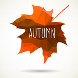 Fall triangular maple leaf Royalty Free Stock Photography