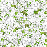 Floral outline background Stock Photography