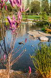 Floral Park With Ornament Pond Stock Photos