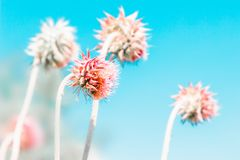 Floral pastel beautiful background with colorful pink wild flowers royalty free stock photography
