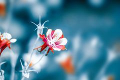 Floral pastel beautiful background with colorful red columbine flowers stock photography