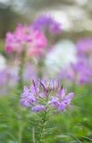 Floral pastel bonito Imagens de Stock