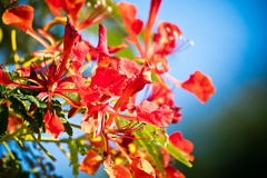 Floral pattern against blue sky. In san jose del cabo mexico Royalty Free Stock Photos