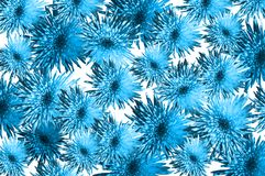 Floral pattern from asters, chrysanthemums in blue color, trend of the year Hawaiian Surf 18-4538 on a white  background. Artist. Gorgeous floral blossom pattern Stock Photos