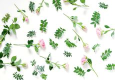 Floral pattern background made from pale pink roses flowers and branches of pistachio on white background. Top view Royalty Free Stock Photo