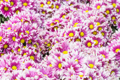 Floral pattern. Background from various flowers. Selective focus stock photography