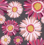 Floral pattern. Beautiful seamless floral pattern, gerbera  illustration Stock Image