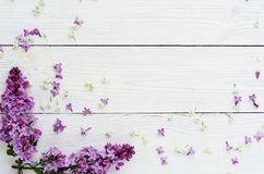 Floral pattern of a branch of lilac royalty free stock photography
