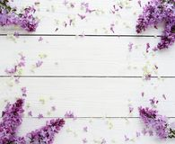 Floral pattern of a branch of lilac stock images
