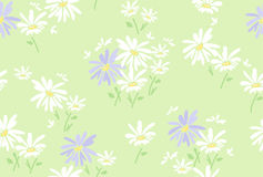 Floral pattern with  chamomile flowers, vector. Seamless floral pattern with  chamomile flowers, vector Royalty Free Stock Photo