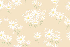 Floral pattern with  chamomile flowers, vector. Seamless floral pattern with  chamomile flowers, vector Stock Images