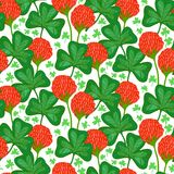 Floral pattern with clover flowers Royalty Free Stock Photography
