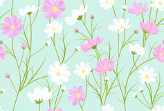 floral pattern with cosmos flowers, vector  Stock Image