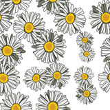 Floral pattern daisies Royalty Free Stock Photos