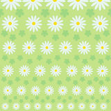 Floral pattern. From different camomiles and leaves Stock Photography