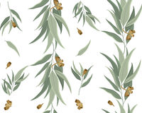 Floral pattern of eucalyptus leaves and seeds. Vector seamless pattern of eucalyptus leaves and seeds Stock Photo