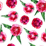 Floral pattern. Flower pink carnation seamless background. Flourish ornamental spring garden texture royalty free stock photo