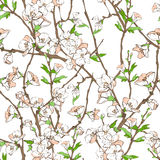 Floral pattern with flowers. Vector seamless floral pattern with flowers, branches and leaves Stock Photography