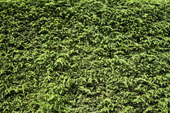 Floral pattern hedge Royalty Free Stock Images