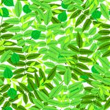 Floral pattern with leaves and foliage. Vector seamless floral pattern with multiple leaves and foliage hand drawn in bright spring green colors on white stock illustration