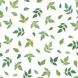 Floral pattern. Leaves seamless background. Leaf ornamental text Royalty Free Stock Photo
