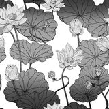 Floral pattern lotus blossom monochrome. Stock Photography