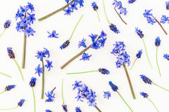 Floral pattern made of blue flowers on white background. Flat lay, top view. Royalty Free Stock Photos