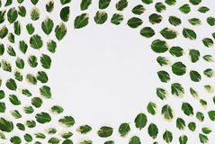 Floral pattern made of green leaves, branches on white background. Flat lay, top view. Leaf pattern texture. Royalty Free Stock Photography