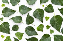 Floral pattern made of green leaves on white background. Flat lay, top view. Leaf pattern texture. Top view royalty free stock image