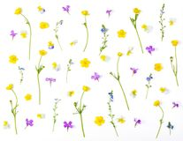 Floral pattern made of meadow flowers isolated on white background. Flat lay. stock photo
