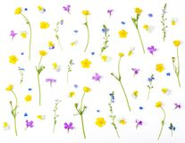 Free Floral Pattern Made Of Meadow Flowers Isolated On White Background. Flat Lay. Royalty Free Stock Images - 117779419